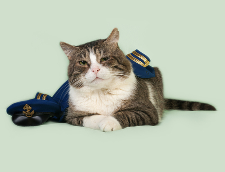 Old striped and white cat in naval uniform with cap lying on green background Imagens