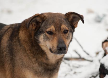 cur: Brown mongrel dog in white snow