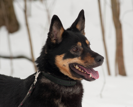 cur: Black and gray mongrel dog standing on white snow