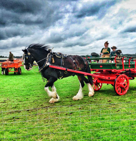 shire horse: Horse and cart being driven around