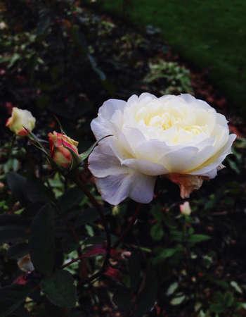 country park: El blanco se levant� en los jardines del parque del pa�s