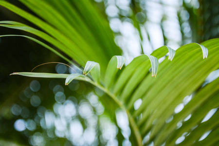 frond: Palm frond