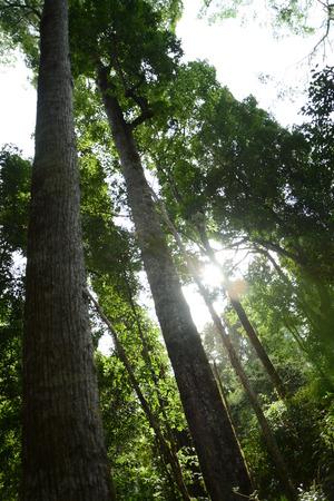 canopy: Rainforest Canopy
