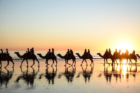 Cable Beach Camels Stockfoto