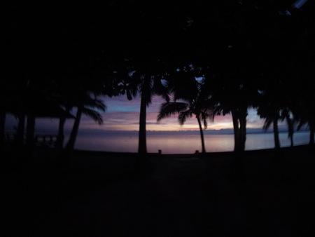 Palm trees panorama Stock Photo