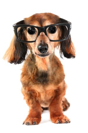 Goofy looking dog with big eyes.  Stock Photo