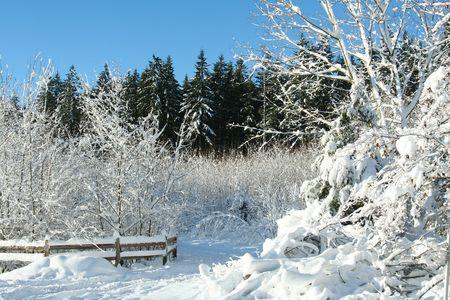 Snowy landscape, photo taken on a bright sunny day. Stock Photo - 2691452