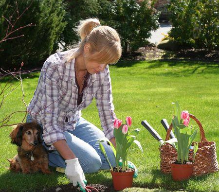 Pretty blond woman enjoying gardening outside in spring.  Stock Photo
