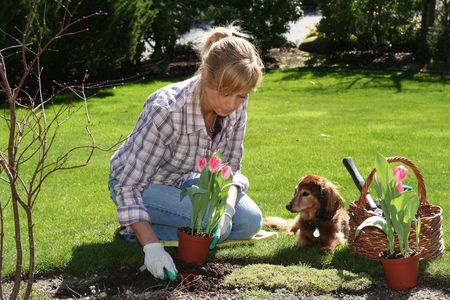 pal: Pretty woman working in her garden with a dog by her side.  Stock Photo