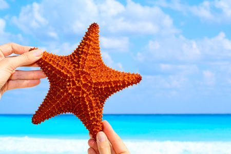 Hand held starfish held up against a beautiful blue sky.