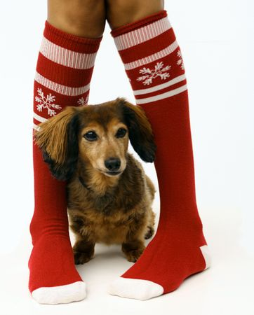 Legs in Christmas stockings with a puppy, isolated photo