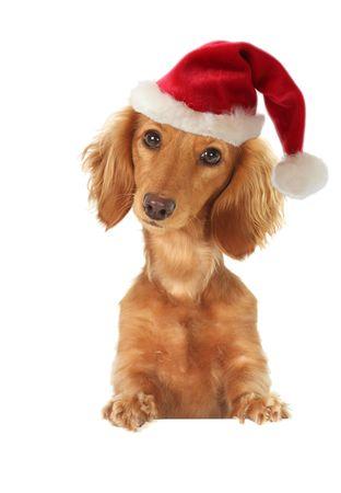 topper: Santa dachshund topper Stock Photo