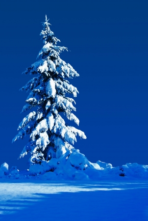 Snow covered evergreen on a moonlit silent night.  Stock Photo