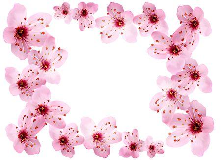 Cherry blossom border.