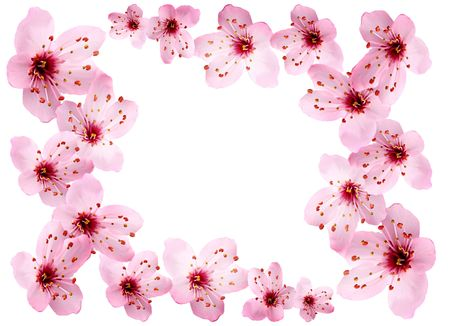 Kirschblüte Grenze. Standard-Bild - 4091667