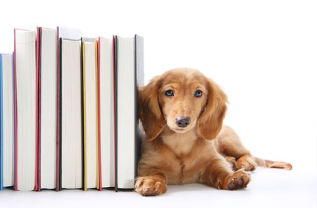 learning materials: Book end puppy Stock Photo