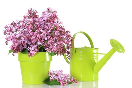 Spring lilac arrangement.  photo