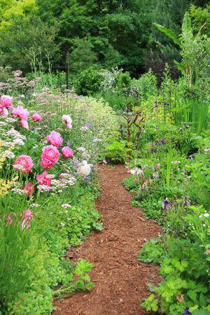 Pretty path in an english cottage garden.  photo