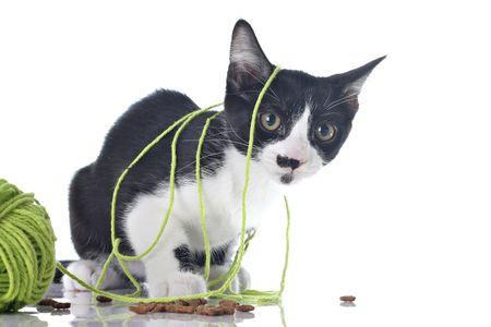 いたずら子猫のウールをもつれた。 写真素材 - 5214547