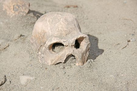 cemetry: Ancient human skull discovery.
