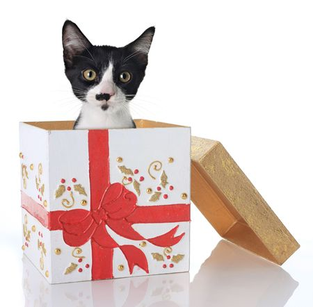 Kitten in a Christmas present photo