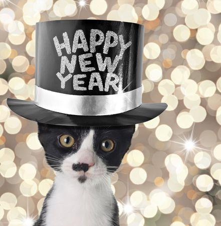hat new year happy new year festive: Cute kitten wearing a happy new year hat.