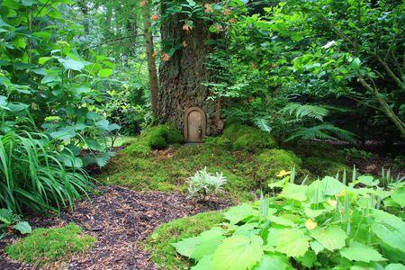 Little fairy tale door in a tree trunk.