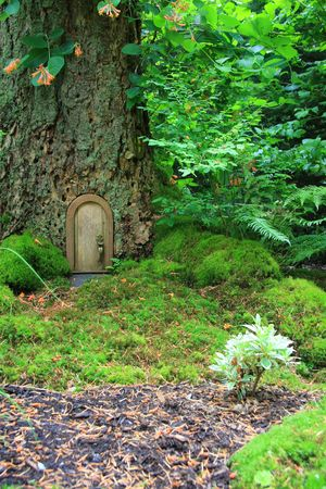 Littel fairy tale door in a tree trunk.  Stock Photo