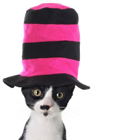 pink hat: Cat wearing a hat Stock Photo