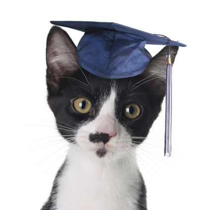 graduation ceremony: Smart cat