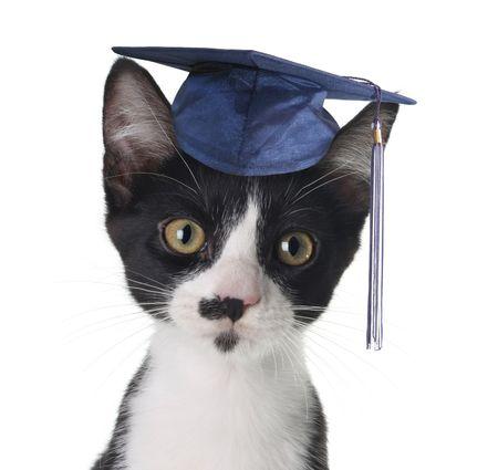 black graduate: Smart cat