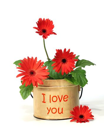 seed pots: Pretty potted daisy with I love you on the container