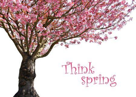 flor de sakura: Precioso primavera blooming cerezo �rboles en rosa.
