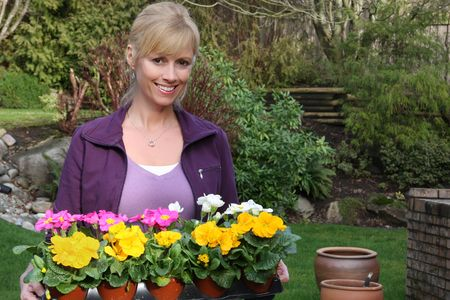 Smiling gardener with a tray of primulas ready to be planted.  photo