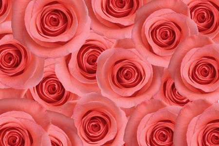 st valentine's: Background of pink roses