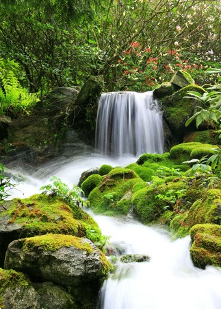 пышной листвой: Small natural spring waterwall surrounded by moss and lush foliage.