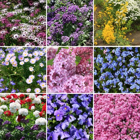 Flower collection photo