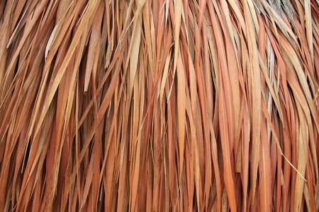 palapa: Close up of a palapa