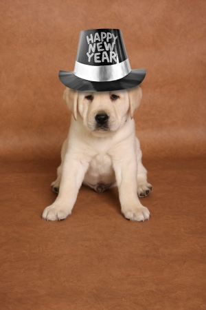 Happy New's year puppy with a funny expression.  스톡 콘텐츠