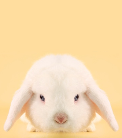 Evil looking Easter bunny rabbit photo