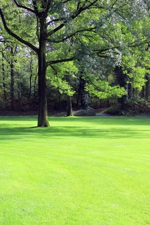 Single large oak tree on a beautifully manicured lawn.