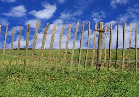 Rustic old fence surrounding a cow pasture.