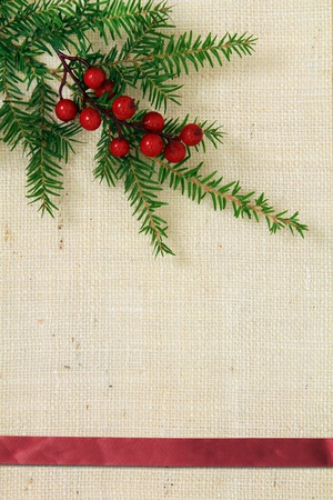 Christmas burlap background with evergreen and holly.