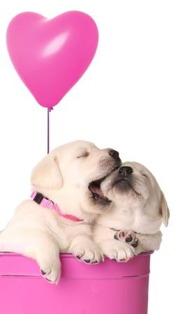 バレンタイン子犬とピンクのハート形風船。