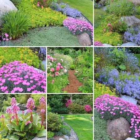 alchemilla: Collage di bei giardini in primavera. Archivio Fotografico