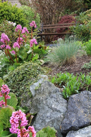 alchemilla: Primavera giardino fiorito e da banco
