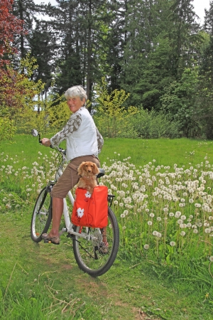 Senior lady on a bicycle with her dachshund puppy.  photo