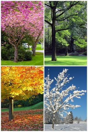 사계절이 봄, 여름, 가을, 겨울 콜라주