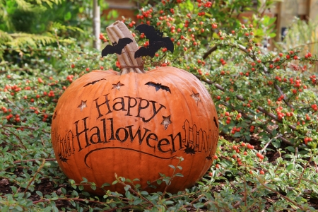 Happy Halloween pumpkin outside. Stock Photo - 15630684