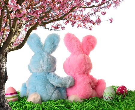Easter bunny pair looking out at the sky Stock Photo - 17960023